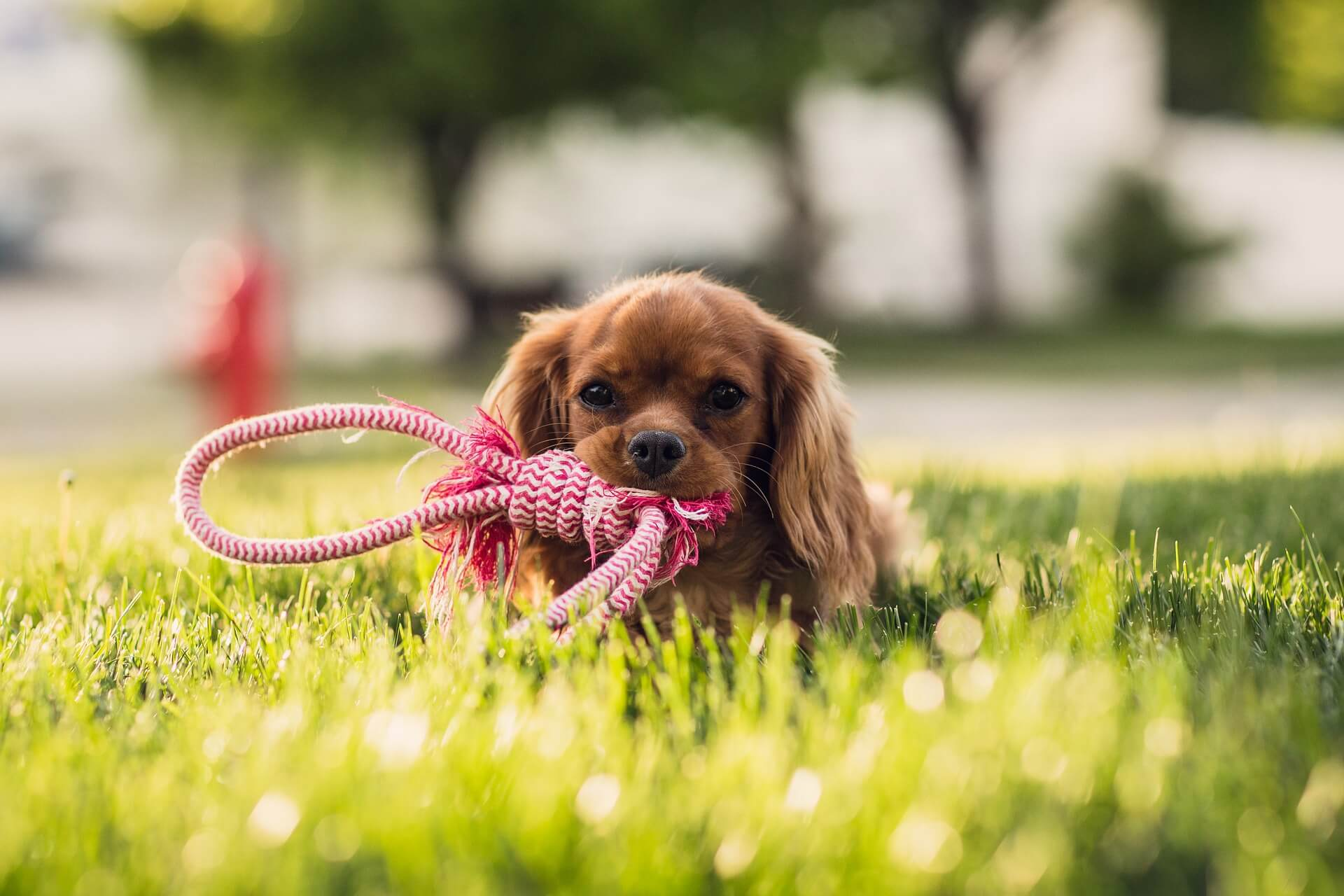 How to Keep Your Pet Safe and Sound During Yard Work